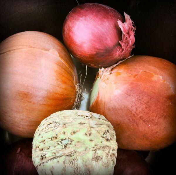 Fototafel, Zwiebeln auf unserem Küchentisch