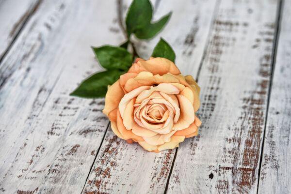 Rose 'Orange', 70 cm