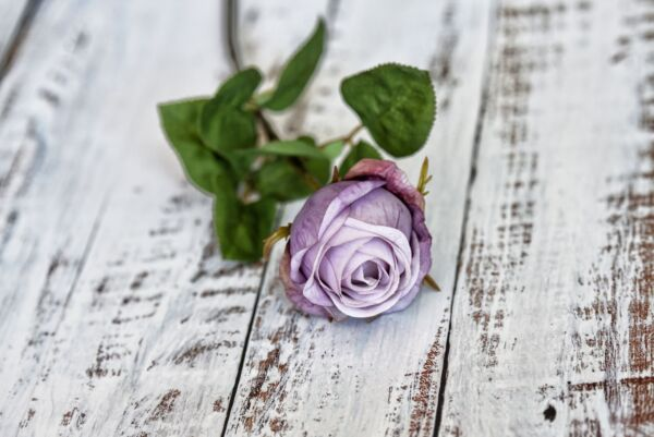 Rose 'Purple Dream', violett